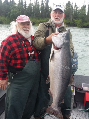 Pro guide and guest catch a very large Alaskan king salmon on Kenai River.