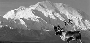 Climb Mt. McKinley (Denali)