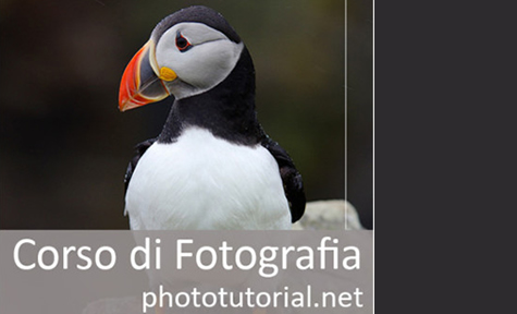 phototutorial.net