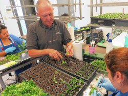 Image of Randy Strobe planing seedlings
