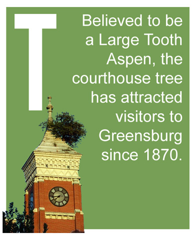 T - Believed to be a Large Tooth Aspen, the courthouse tree has attracted visitors to Greensburg since 1870.