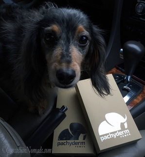 Traveling dog miniature dachshund Wilhelm is ready to test Pachyderm POWER 10,000mAh Portable Device Charger/Power Bank... if there are treats.