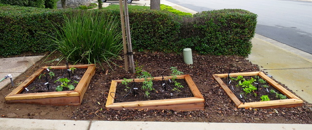 Building a Front Yard Vegetable Garden