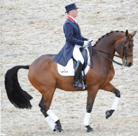 Dressage Tuition