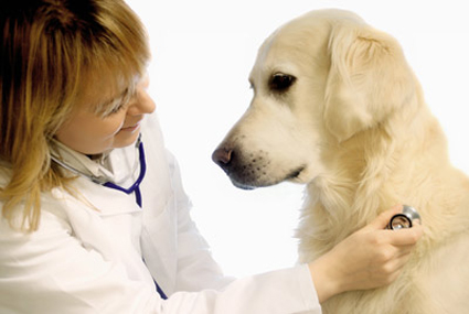 Veterinary Finance Program