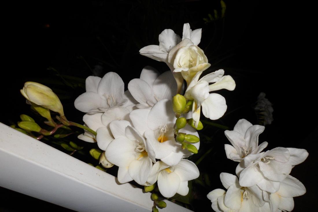 i Nostri bulbi che fioriscono/ tempistiche sull'impianto.... 6910005_orig