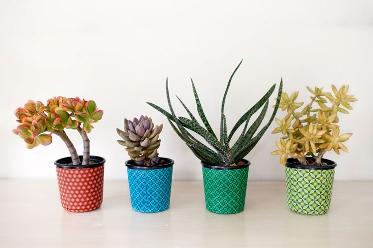 A selection of Reclaim Design's fabric decoupage recycled plastic pots with succulents