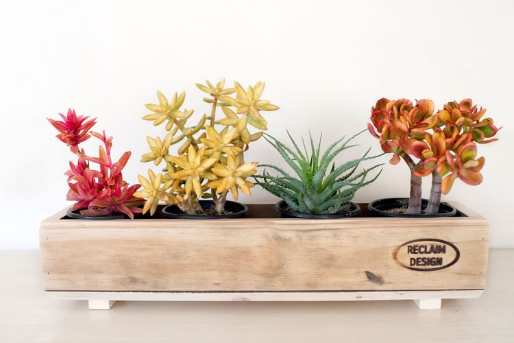 Reclaim Design's 4 pot planter with feet made from reclaimed wood containing succulents.