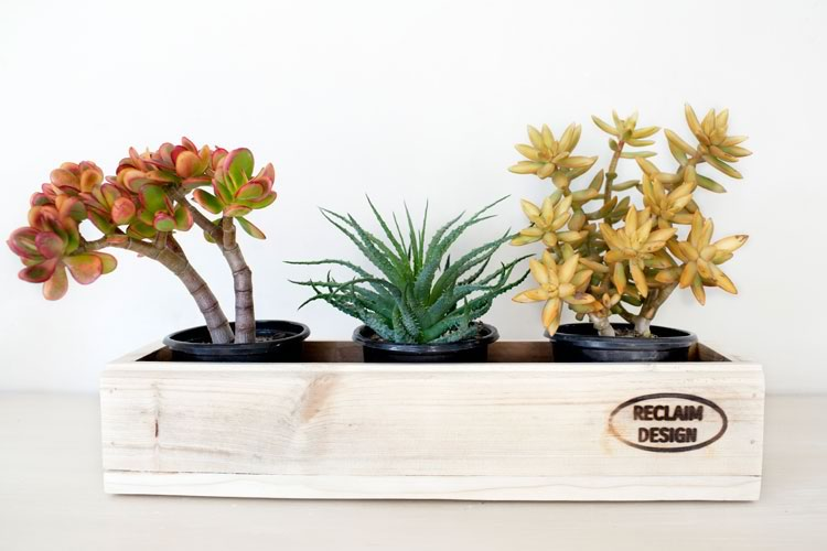 Reclaim Design's 3 pot planter made from reclaimed wood containing succulents.