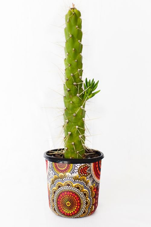 Reclaim Design's fabric decoupage recycled plastic pot with cactus