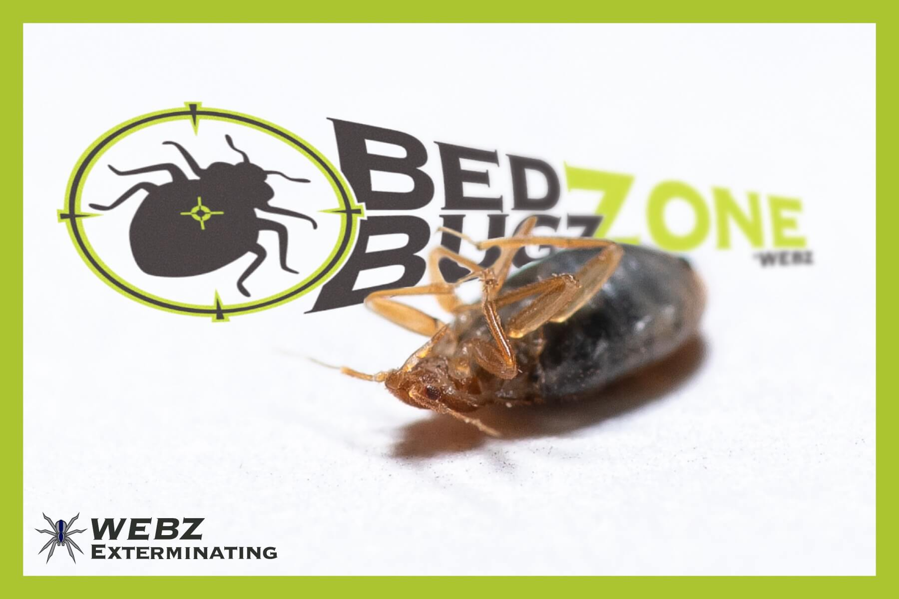 cincinnati bed bug service
