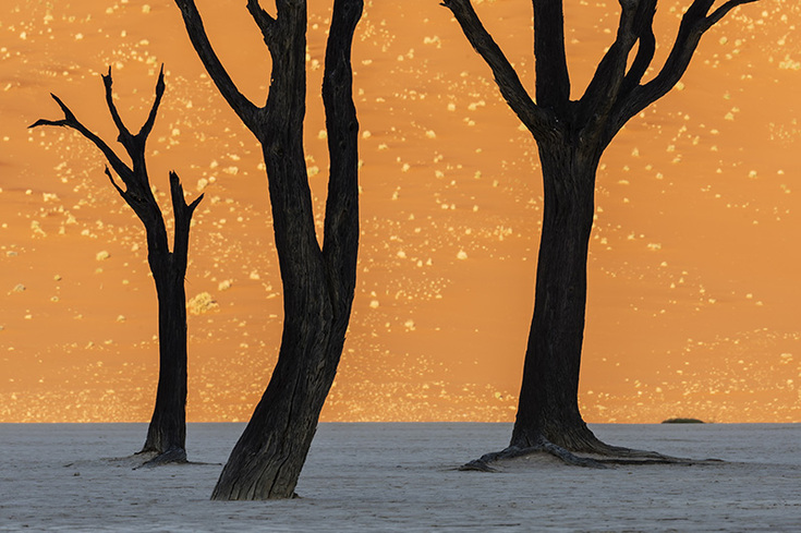 Trees in shadow silhouetted against a sunlit sand dune in Namib Desert, Namibia
